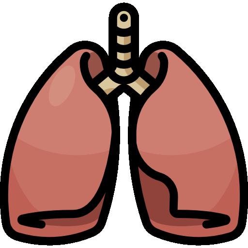 bellydance cardio